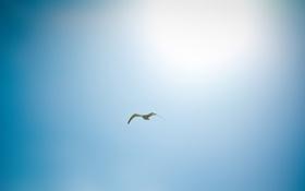 Картинка небо, солнце, птицы, фото, птица, пейзажи, full hd