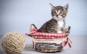 Картинка клубок, котенок, корзина, малыш
