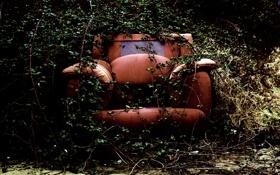 Обои растения, заброшеное, зелень, кресло