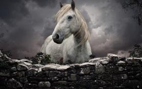 Картинка белый, конь, забор, каменный