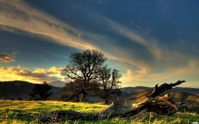 Обои лес, трава, деревья, холмы, Небо, Sky, Grass