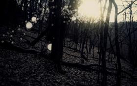 Обои леса, осень, деревья, фото, природа, осенние обои