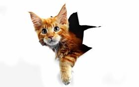 Картинка кошка, бумага, рыжая