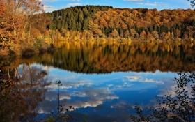 Обои осень, лес, небо, деревья, озеро