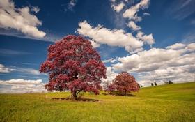 Обои grass, sky, cloud, autumn, tree