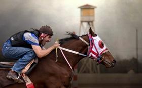 Обои конь, спорт, всадник