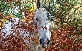 Обои лошадь, заросли, колючки, белая