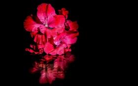 Обои вода, цветы, отражение, яркие, черный фон