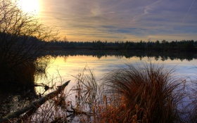 Картинка осень, трава, вода, пруд, болото, вечер, сухая