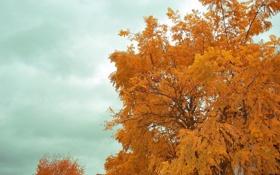 Обои осень, небо, дерево