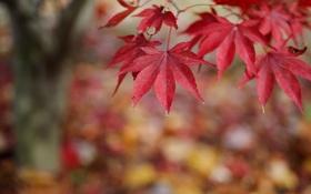 Обои осень, природа, листва, ветка