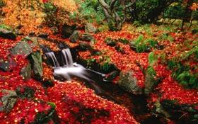 Обои листья, ручей, Осень
