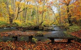Картинка река, осень, скамья, парк