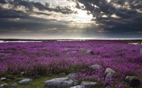 Картинка пейзаж, небо, поле, вода, залив, берег, камни