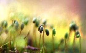 Обои макро, ростки, мох, пагоны