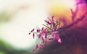 Картинка осень, деревья, цветы, абстракция