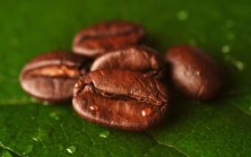 Картинка капли, лист, кофе, зерна