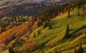 Картинка трава, пейзаж, природа, фото, гора, ель, склон