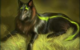 Картинка лес, трава, собака, шерсть, пес