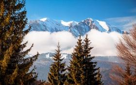 Картинка облака, снег, деревья, пейзаж, горы