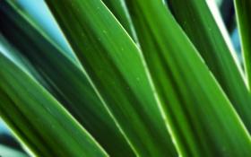 Картинка фоновые картинки, стебельки, фото, green macro, зелёный листья, листок, красивые обои для рабочего стола