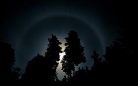 Обои небо, лучи, свет, деревья, ночь, фото, дерево