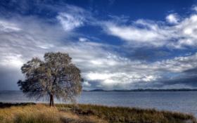 Картинка пейзаж, птицы, река, дерево