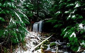 Обои зима, лес, снег, водопад, хвойный
