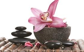 Картинка бамбук, лепестки, миска, орхидея, спа камни