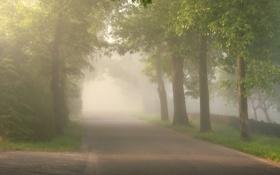 Обои дорога, деревья, природа, фото, дерево, пейзажи, дороги