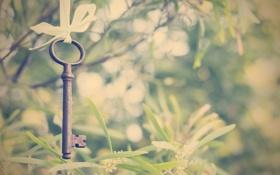 Обои зелень, лето, ключ, лента