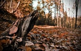 Картинка осень, небо, листья, деревья, время года, опавшие, пенёк