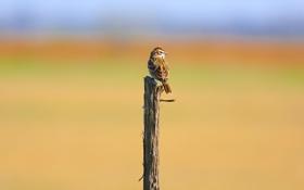 Обои птица, назад, воробей, боке, глядя, филиал