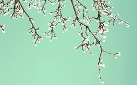Обои весна, цветение, ветви, сад, blossom, цветы