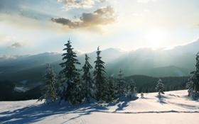Картинка холод, зима, солнце, снег, деревья, горы, природа