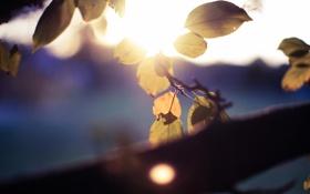 Обои листья, природа, макро