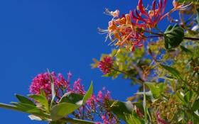 Обои листья, ветки, небо, цветы