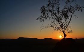 Обои небо, солнце, закат, дерево, силуэт