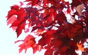 Картинка листья, ветки, природа, дерево