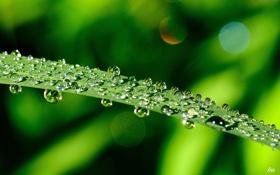 Картинка зелень, капли, лист, роса