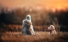 Картинка трава, игрушка, собака, боке, child