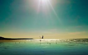 Картинка море, небо, солнце, лучи, горы, птицы