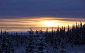 Картинка зима, деревья, пейзаж, закат