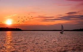 Картинка море, небо, закат, птицы, озеро, парусник