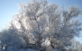 Обои иней, солнце, Зима, мороз