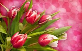 Обои цветы, сердца, тюльпаны