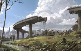 Картинка животные, мост, город, руины, Элли, сша, The Last of Us