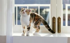 Обои кошка, обои, окно