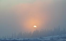 Картинка зима, лес, небо, солнце, снег, деревья, пейзаж