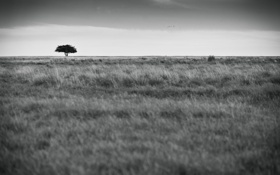Обои поле, дерево, ч/б, Life, by Robin de Blanche
